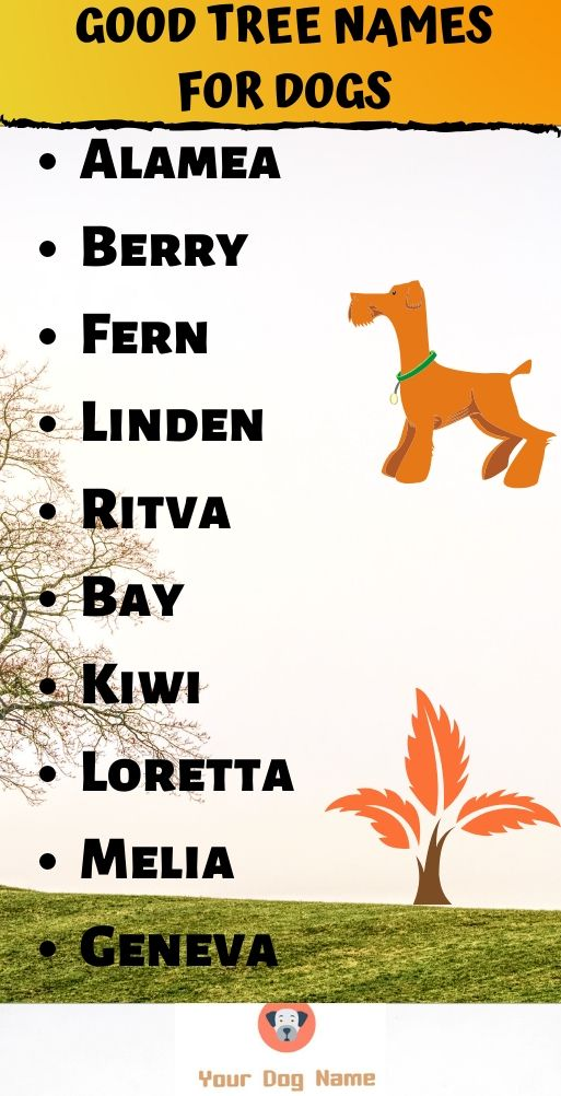 Tree Names For Dogs