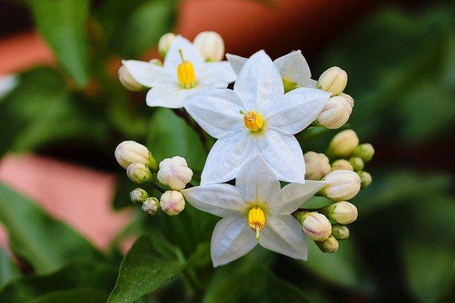 Top 10 Jasmine Perfumes for Women