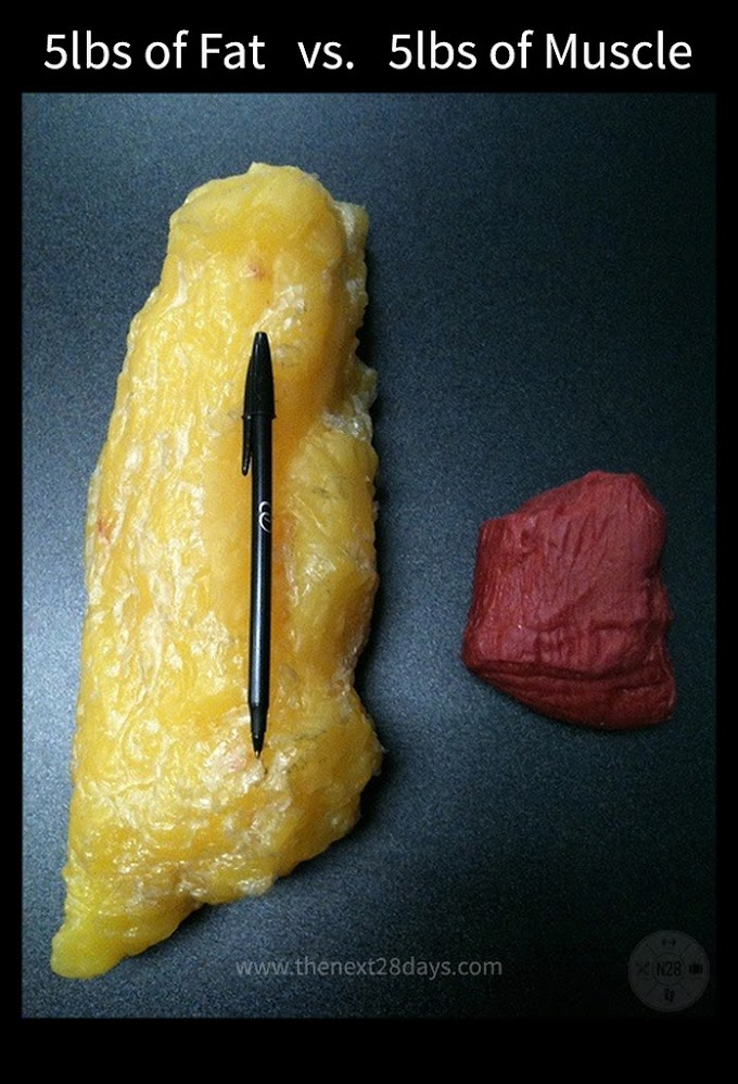 The difference between Muscle vs. Fat