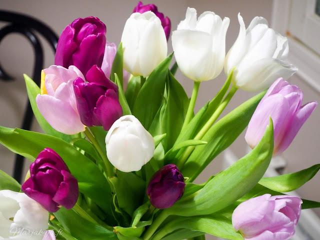 kevään odotus tulppaanit tulppaanikimppu kauniisti kotimainen kukka