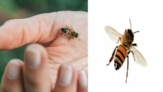 Do you know what to do immediately after biting a bee?