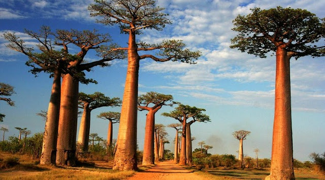 Profil Negara Malagasi: Keadaan Alam, Budaya, Perekonomian, Penduduk dan Bentuk Pemerintahan
