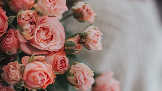 Flores, Buquê De Rosas, Cor De Rosa