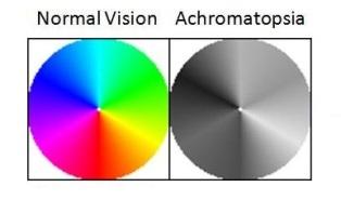 Monochromat (Monochromacy)
