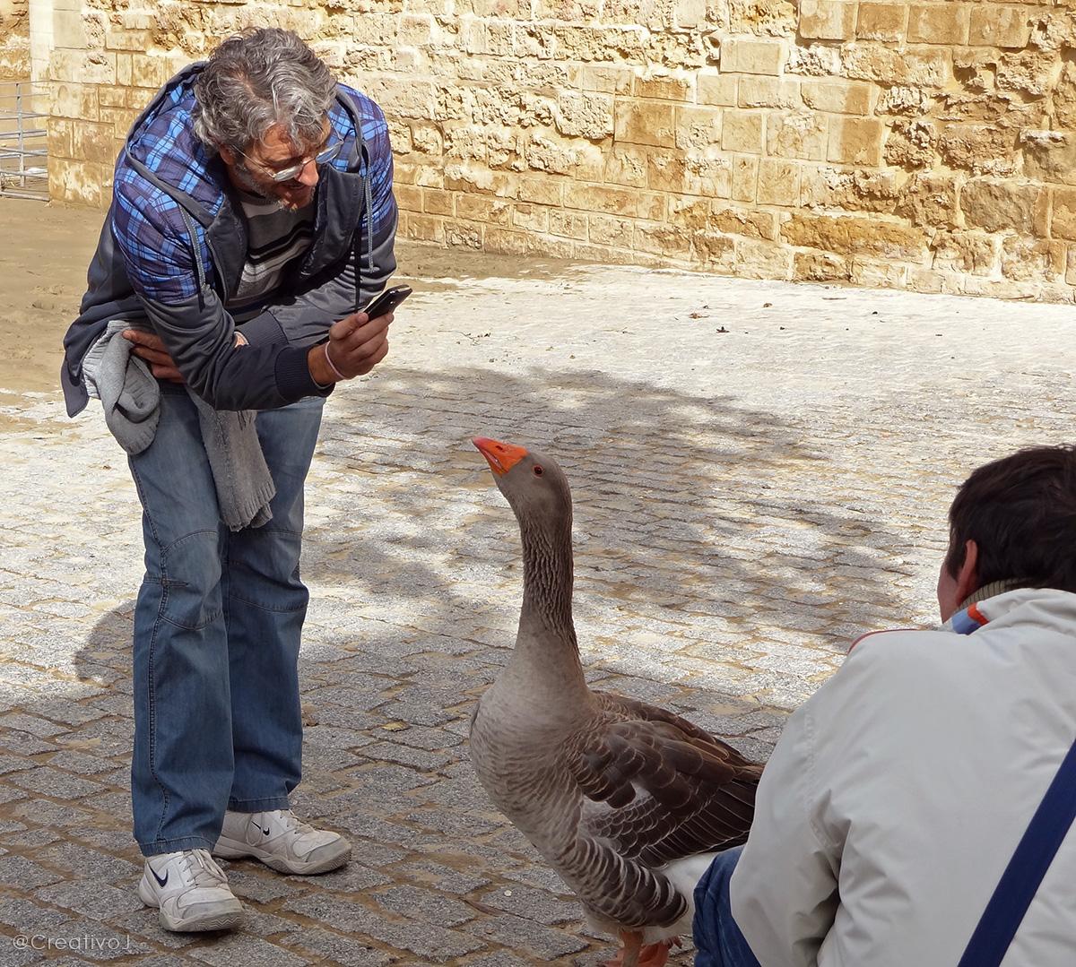 Despues Del Click Ganso De La Calahorra Guadalquivir Jugando
