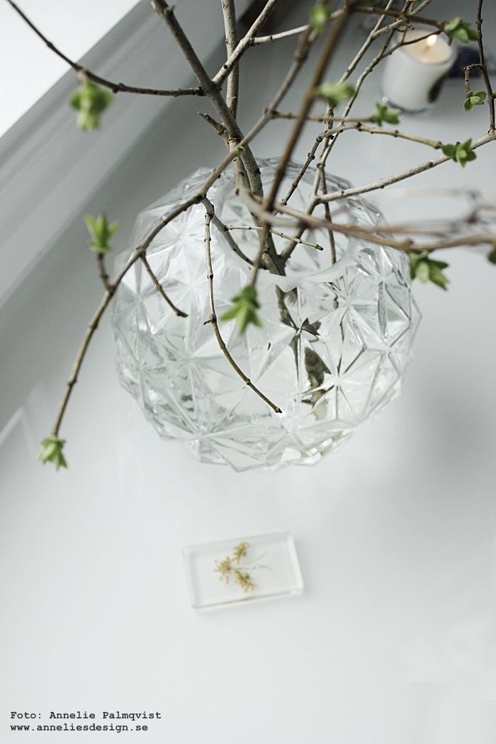 växter, i kub, kuber, webbutik, webbutiker, webshop, inredning, växt, blomma, blommor, gul, gula, suyrén, syréner, annelies design,