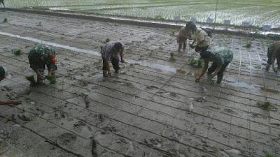 Kepala Dinas Pertanian kab, Tobasa : PPL diwilayah harus inovatif