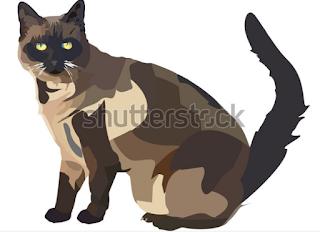 illustration drawing cat