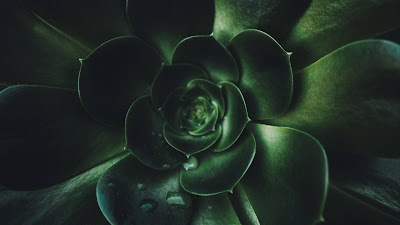 Green wallpaper plant, leaves, macro