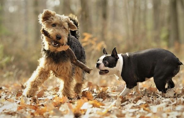 See some facts on the breed temperament of terrier dogs before you regret