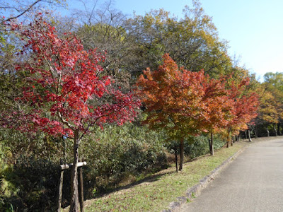 【大阪府枚方市】山田池公園・秋の紅葉ウォーキング