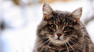 kucing imut dan lucu