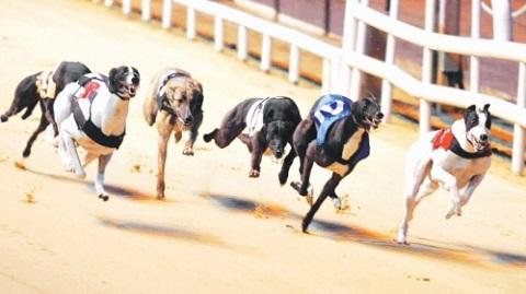 Cần lưu ý đơn vị cược và quy tắc cược đua chó tại W88