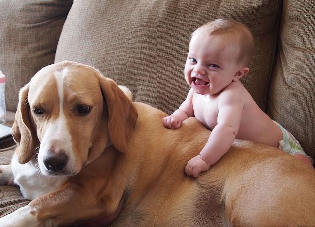 http://www.livepind.com/watch-live-punjab/Animals-never-fail-to-make-us-laugh