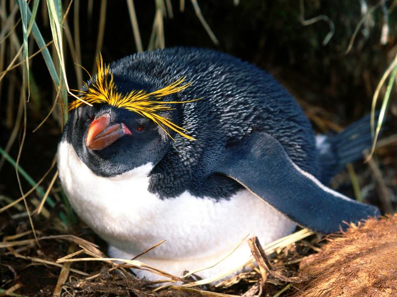 Пингвины в фотографиях