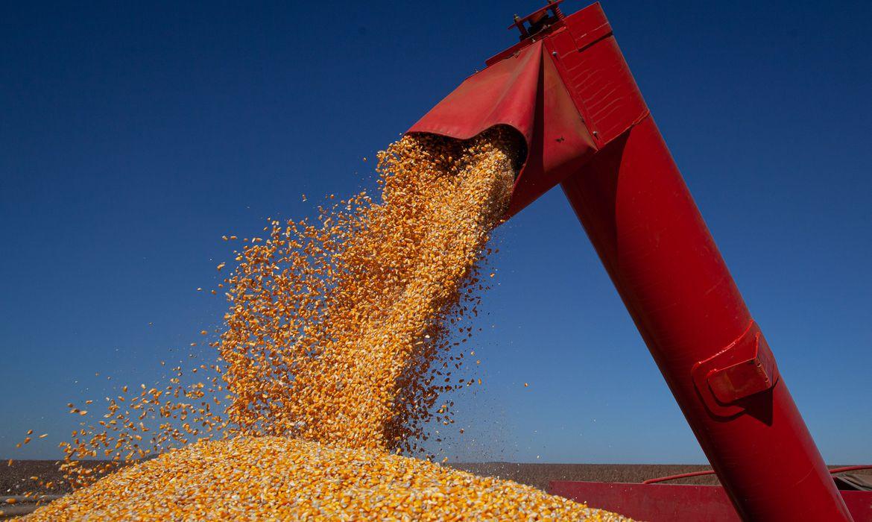 Brasil é o 4º maior produtor de grãos, atrás da China, EUA e Índia, diz estudo