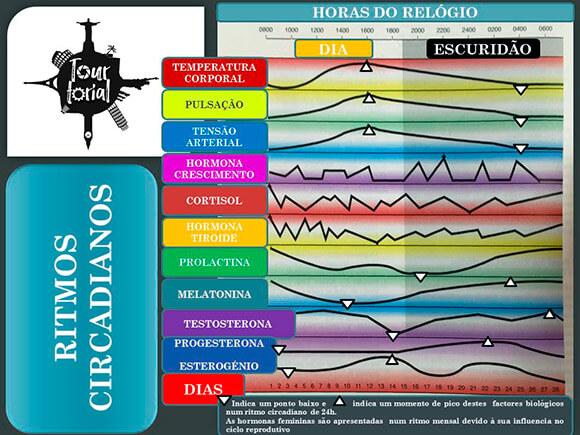 ritmos-circadianos-picos-hormonios