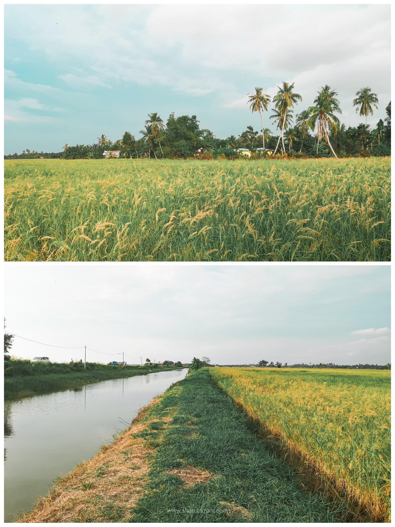 Apa Ada Di Ban Pecah Tanjung Piandang, Perak?