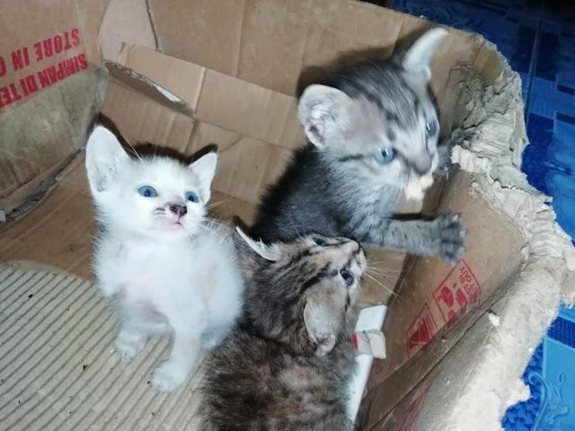 Hari Kucing Sedunia 2021, Selamatkan Kucing Kampung!