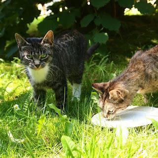 Susu Manusia untuk Anak Kucing