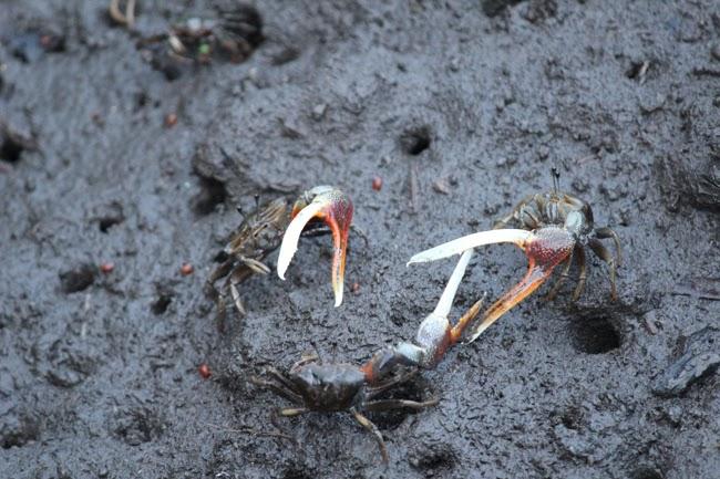 Más cangrejos