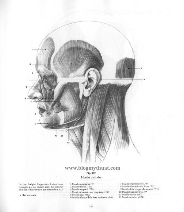 Human Anatomy Drawing Pdf