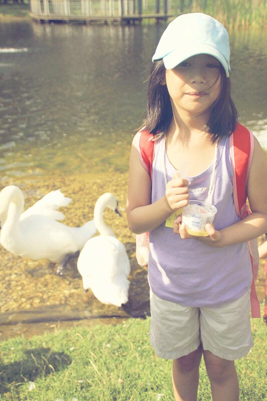 Park Visits With The Kids on Any Season, summer swan park