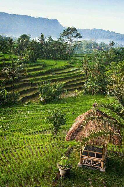 Pemandangan Alam Indah Pematang Sawah di Desa