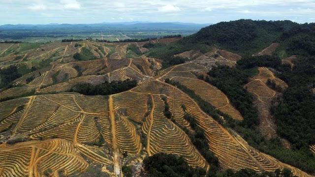 ارتفعت معدلات إزالة أشجار الغابات في آسيا بسبب التوسع في زراعة محاصيل مثل النخيل