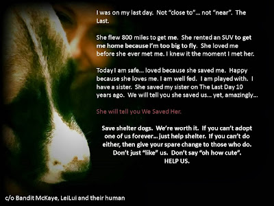 Save a Shelter Dog... maybe save a little more than you expected :) Nic