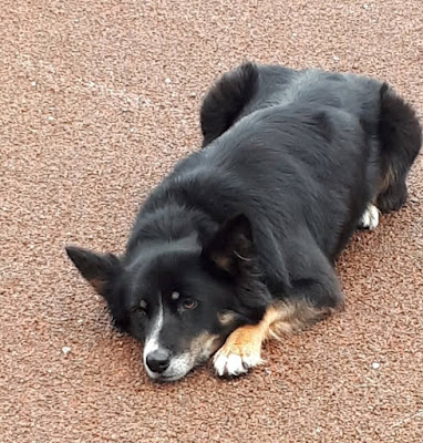 educateur canin annecy albertville ugine marlens faverges thones