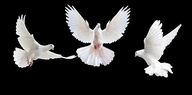 Bird Photoshop Overlays