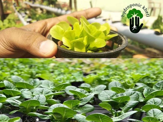 Soil Less Farming Hydroponic Kheti