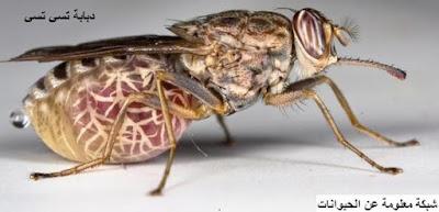 الحشرات,حشرات,الحشرات المنزلية,الحشرات الضارة,الحشرات القاتلة,الحشرات المضيئة,حشرات ضارة,حشرات قاتلة,حشرات سامة,الضارة,النباتات,مكافحة الحشرات,معلومات,التخلص من الحشرات,القضاء على الحشرات,حشرة,الحشرات السامة,الحشرات المزعجة