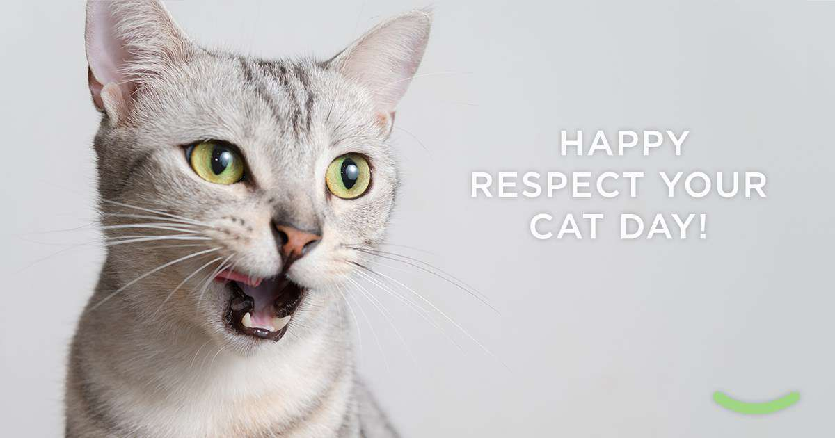 Respect Your Cat Day Wishes Beautiful Image