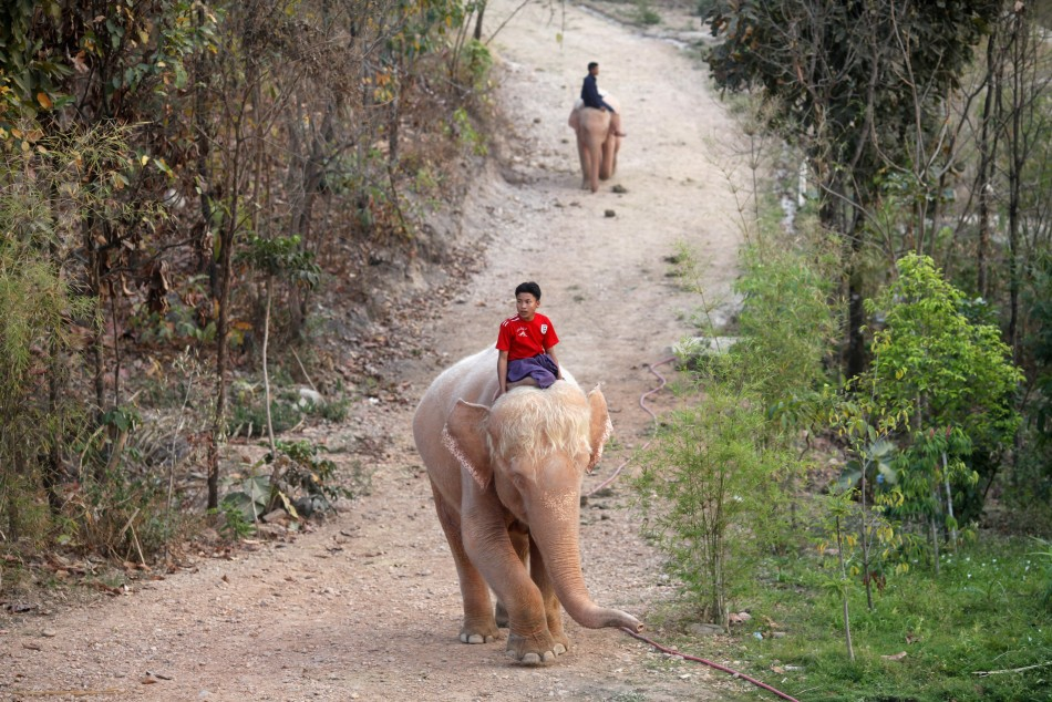 Elephant | A-Z List of 125 Rare Albino Animals [Pics]