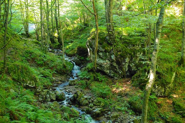 Arroyo Valle de Foix atravesando bosque de montaña en concejo de Quirós Asturias.