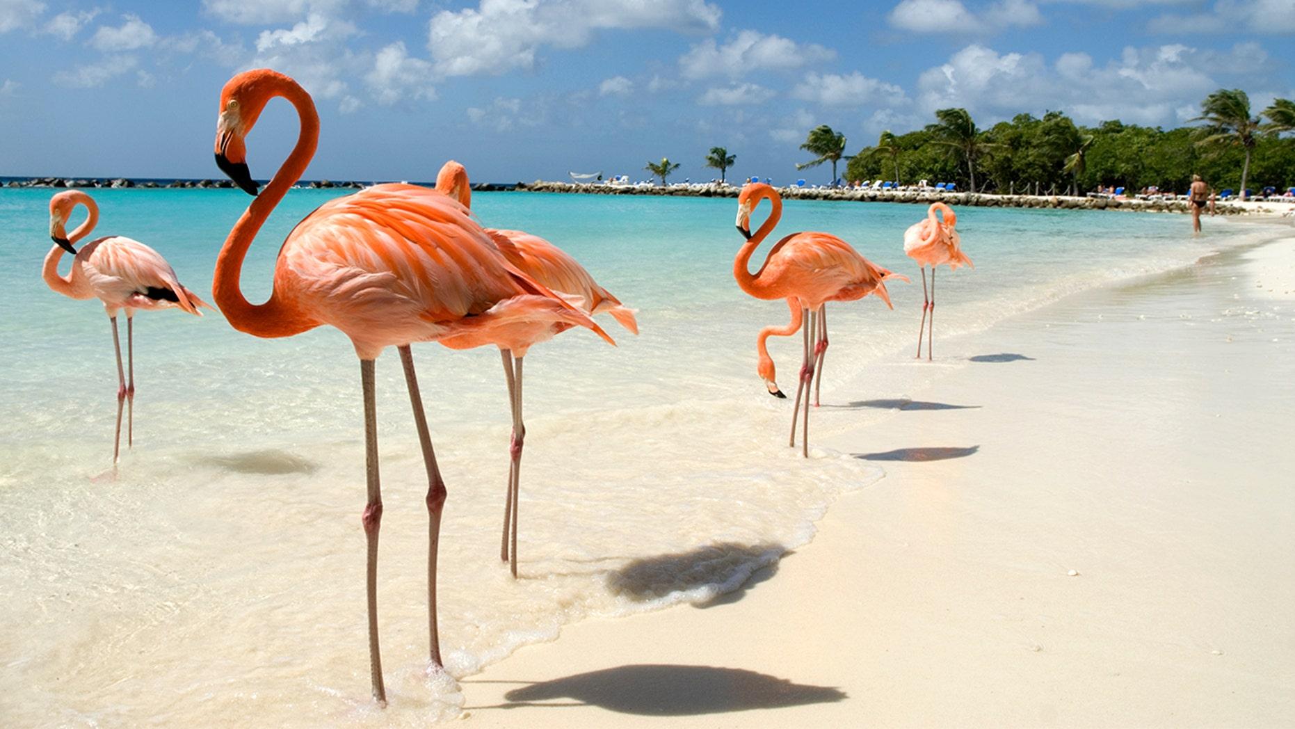 Марш фламинго на острове Инагуа, на Багамах