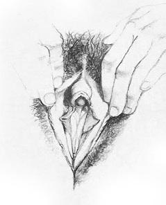 Жіночі статеві органи фото 11
