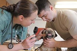 Cara Dokter Hewan Mendiagnosis Penyakit pada Hewan