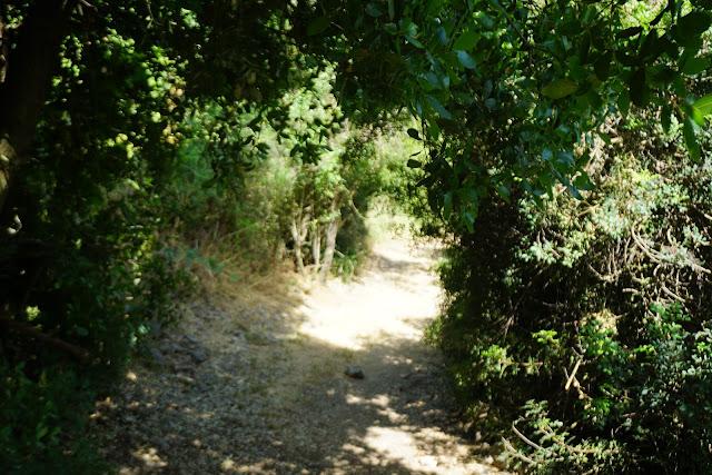 הדרך לעין רזיאל
