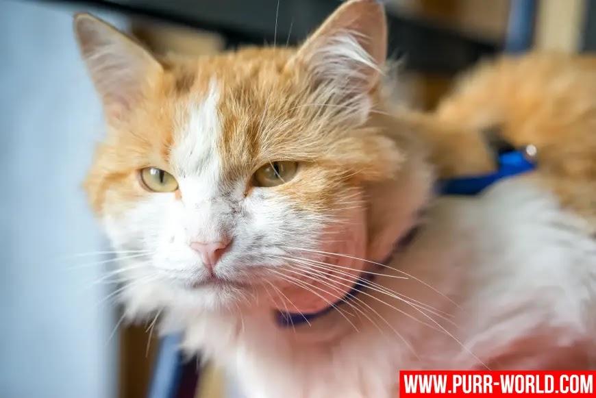 خراجات القطط: الأسباب و العلاج