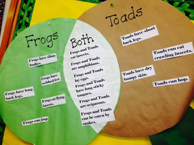 frog and toad venn diagram wiring 3 switches in one box mrs vento s kindergarten frogs toads with facts about