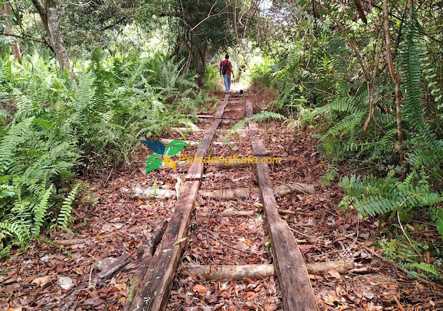 Hutan Desa Kalibandung