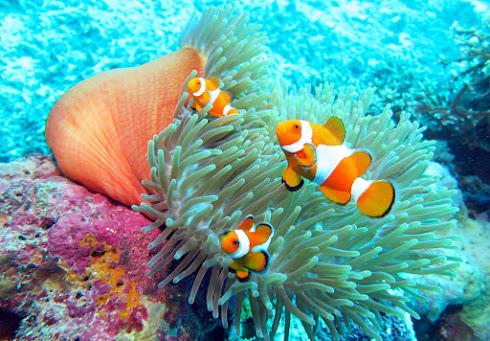 Wakatobi National Park with its Natural Beauty and Beautiful Underwater Life