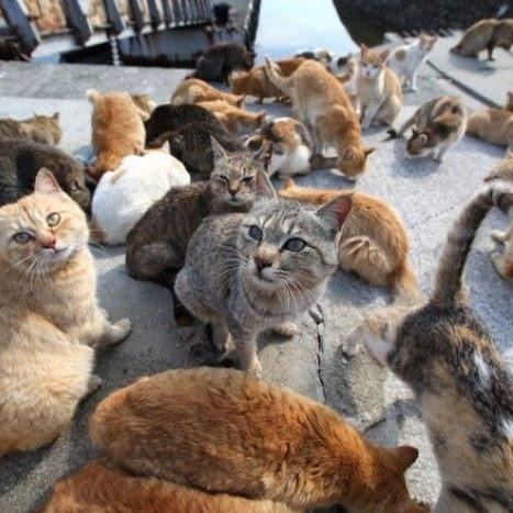 Badai Hagibis dan Kucing Okishima di Jepang