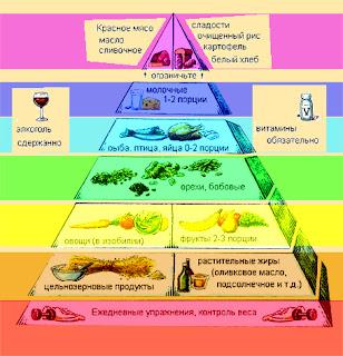 Здоровый образ жизни. Уровни Пирамида рационального питания