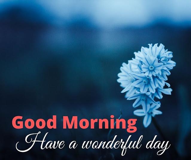Amazing Morning Photos