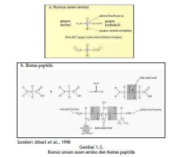 Rumus umum asam amino dan ikatan peptida
