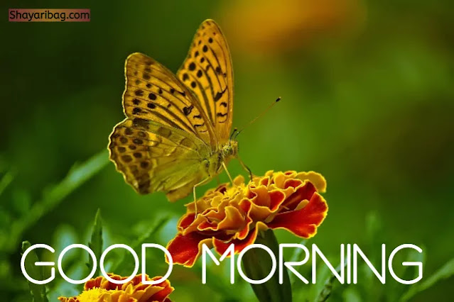 Good Morning Flowers Butterfly Images